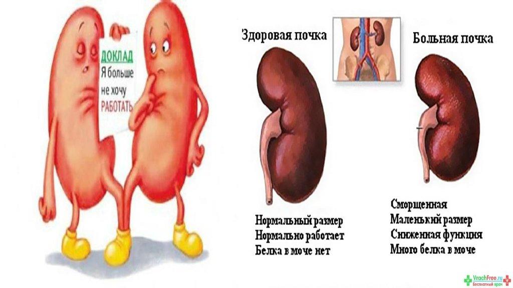 к какому врачу обратиться с повышенным холестерином