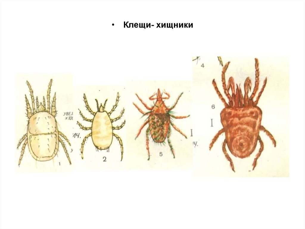 методы борьбы паразитами в человеке