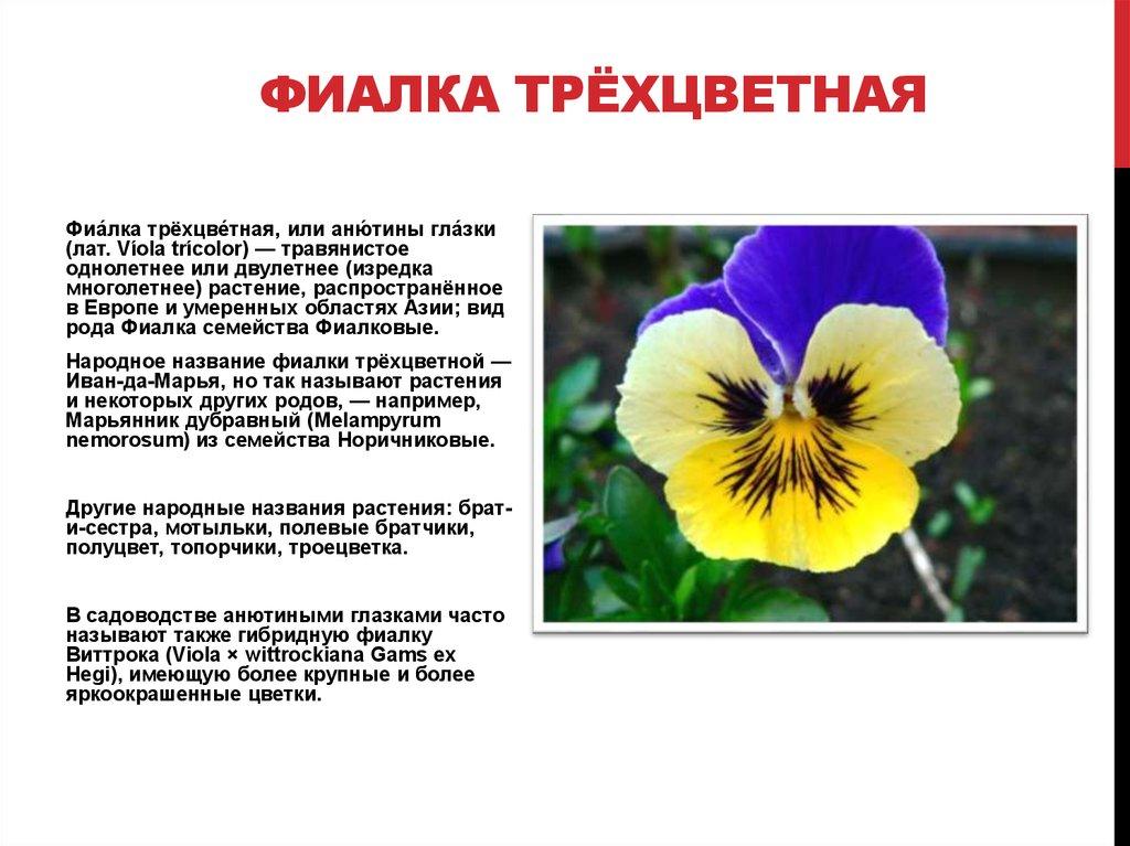 Виды и разновидности фиалок - online presentation