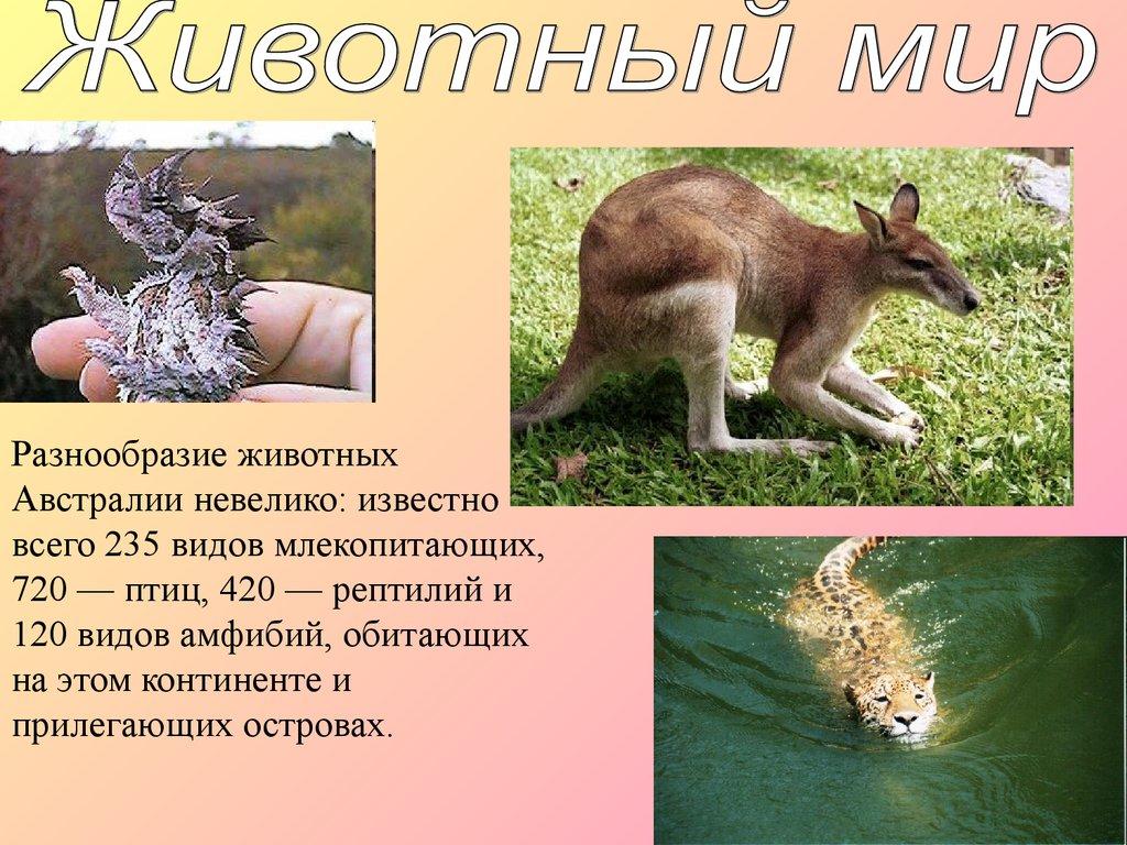 доклад с картинками на тему берегите природу
