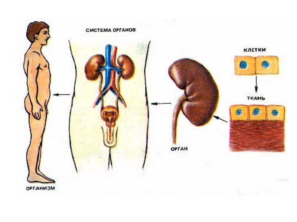 повышен холестерин крови 6