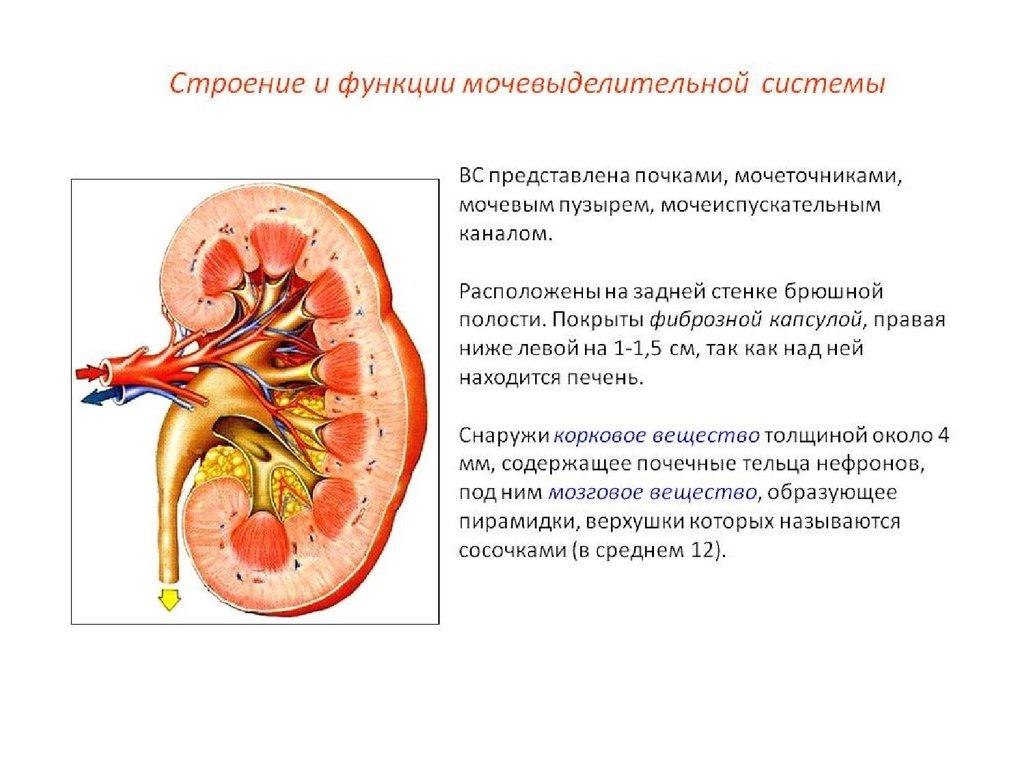 снизить высокий уровень холестерина крови