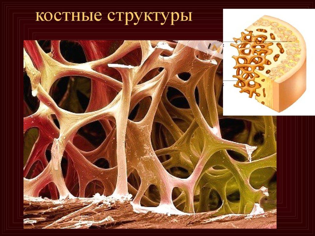 Гематология заболевания крови