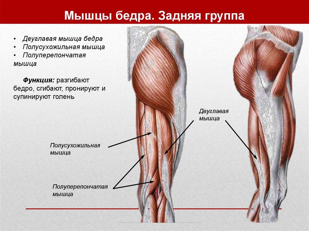 Двуглавая мышца бедра в домашних условиях