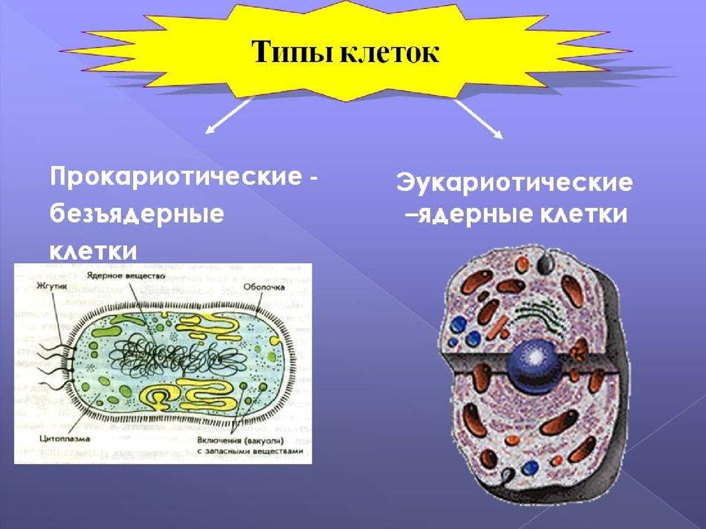 картинки по теме прокариоты