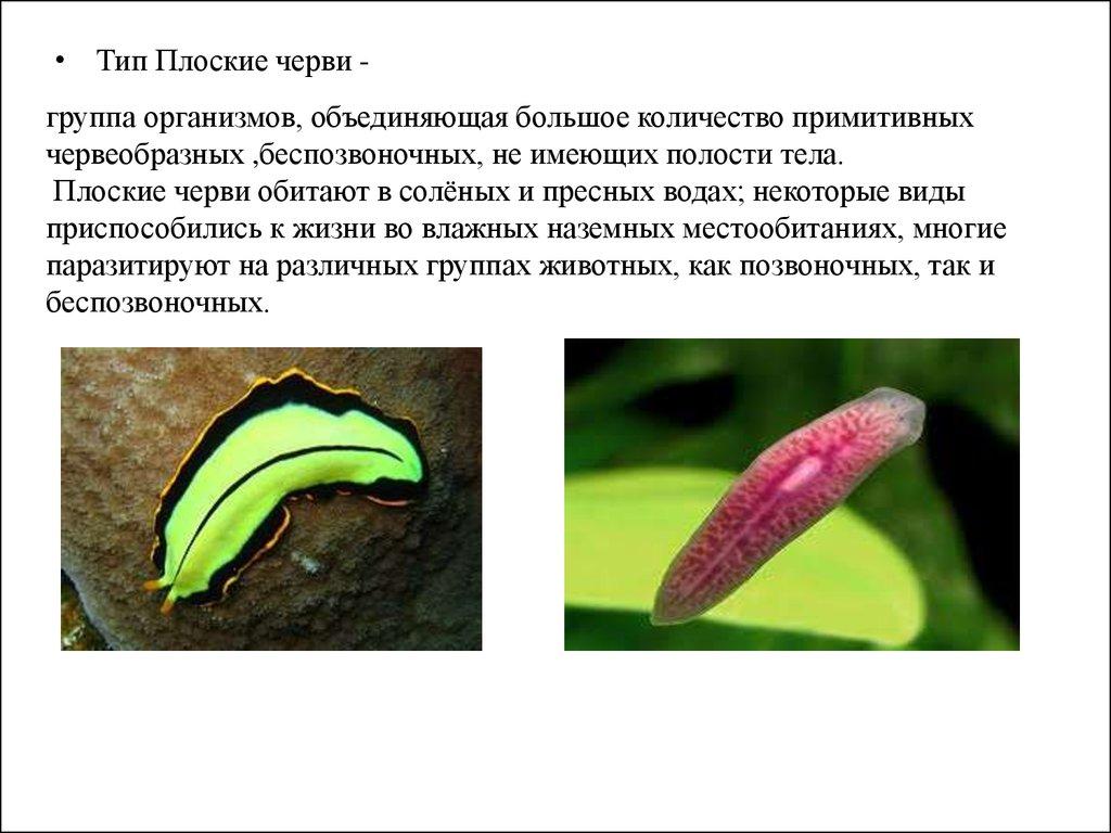 от круглых паразитов средство
