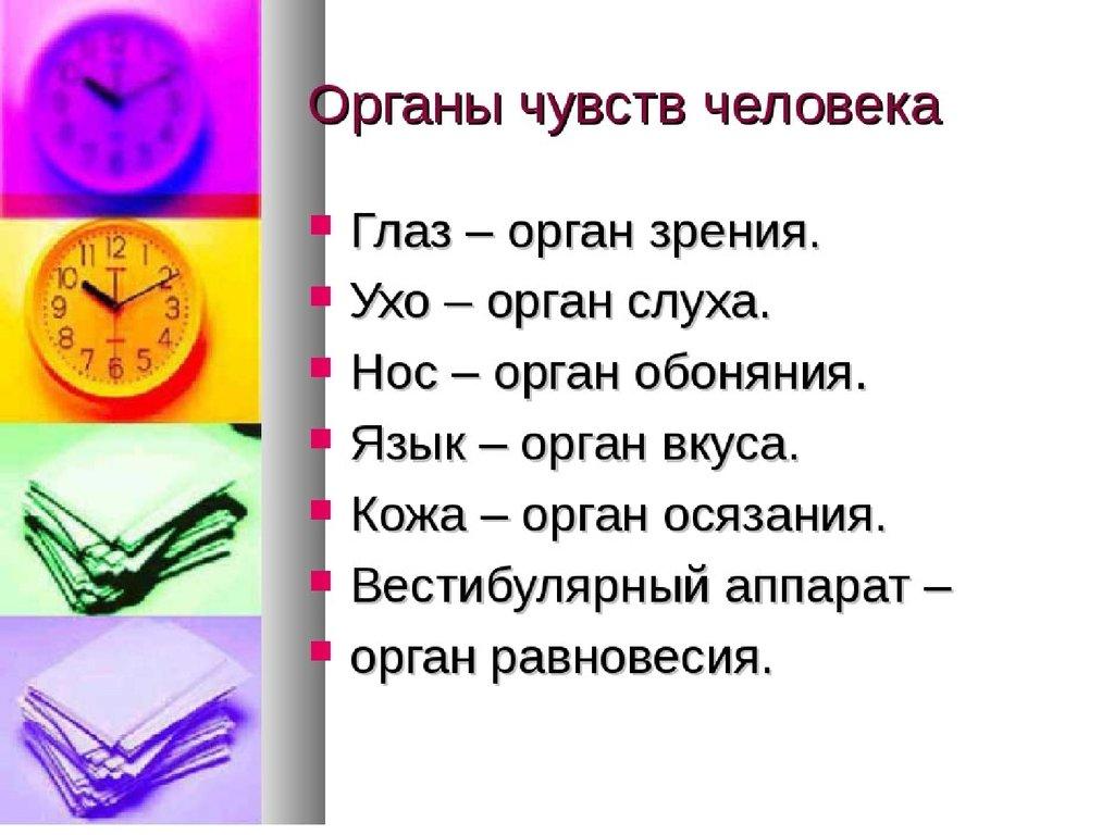 7 органов чувств человека