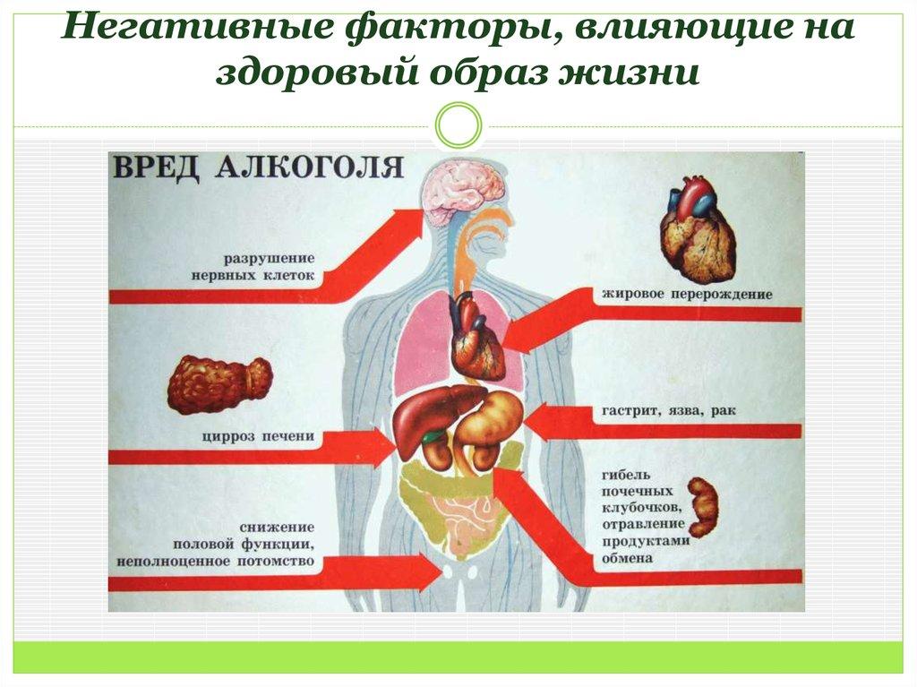 влияние здорового образа жизни на человека
