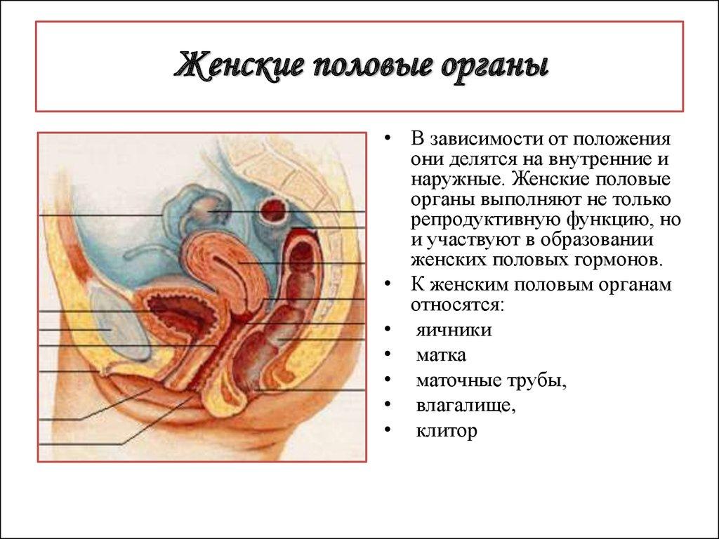 очистка организма от токсинов и паразитов