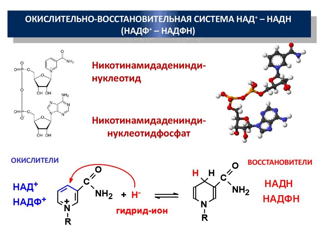 Никотинамидадениндинуклеотид