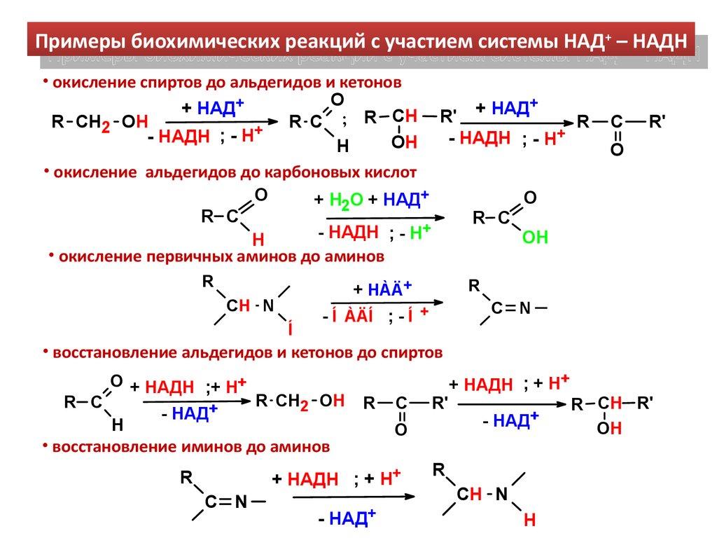 никотинами-дадениндинуклеотид