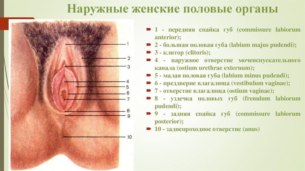 polovie-organi-zhenshin-smotret-onlayn