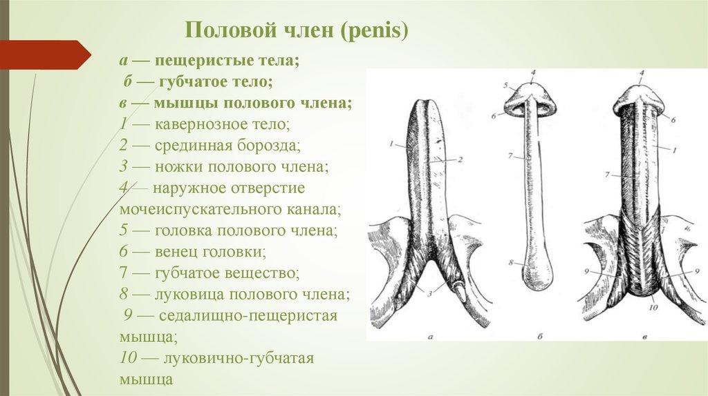 luchshee-porno-v-rossii-v-hd