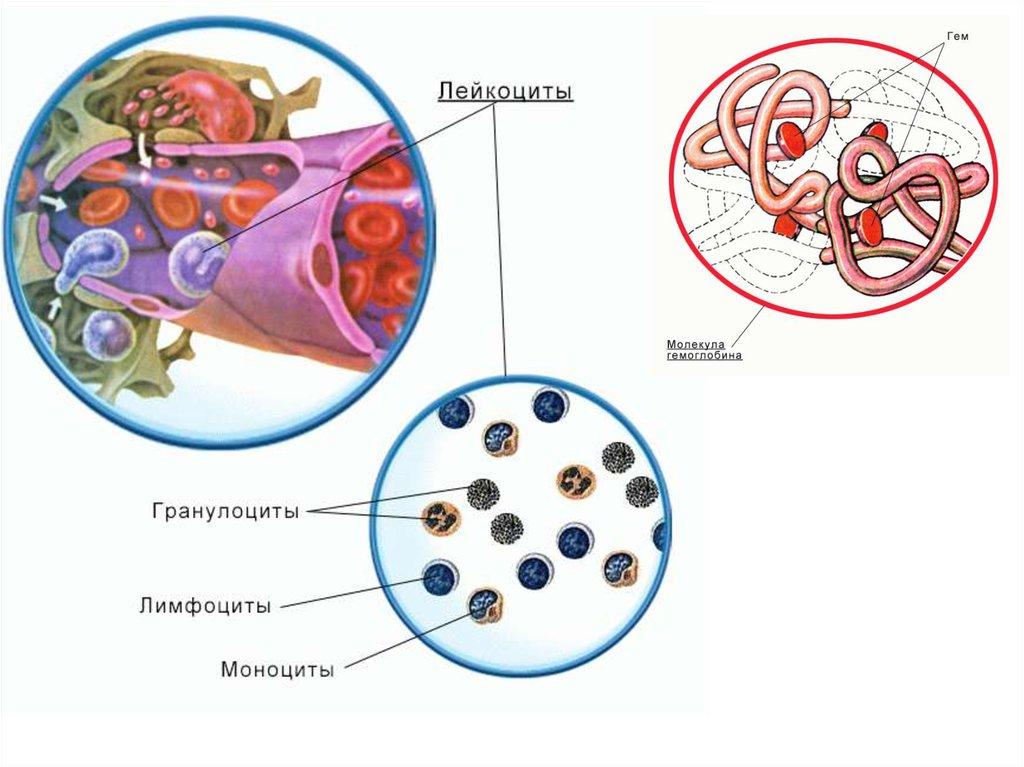 внутренняя среда транспорт веществ 8 класс реферат