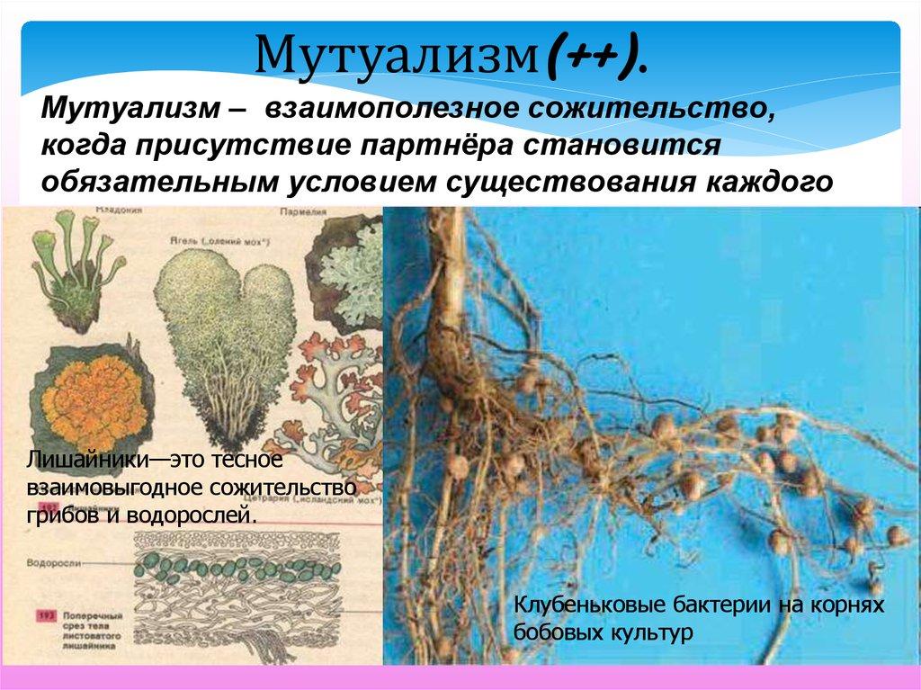 Что такое биотические отношения организмов