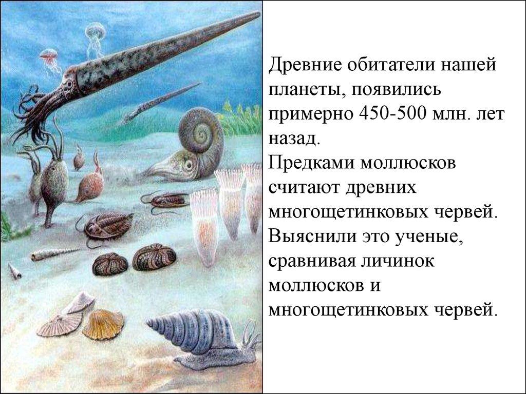 презентации головоногие моллюски скачать онлайн