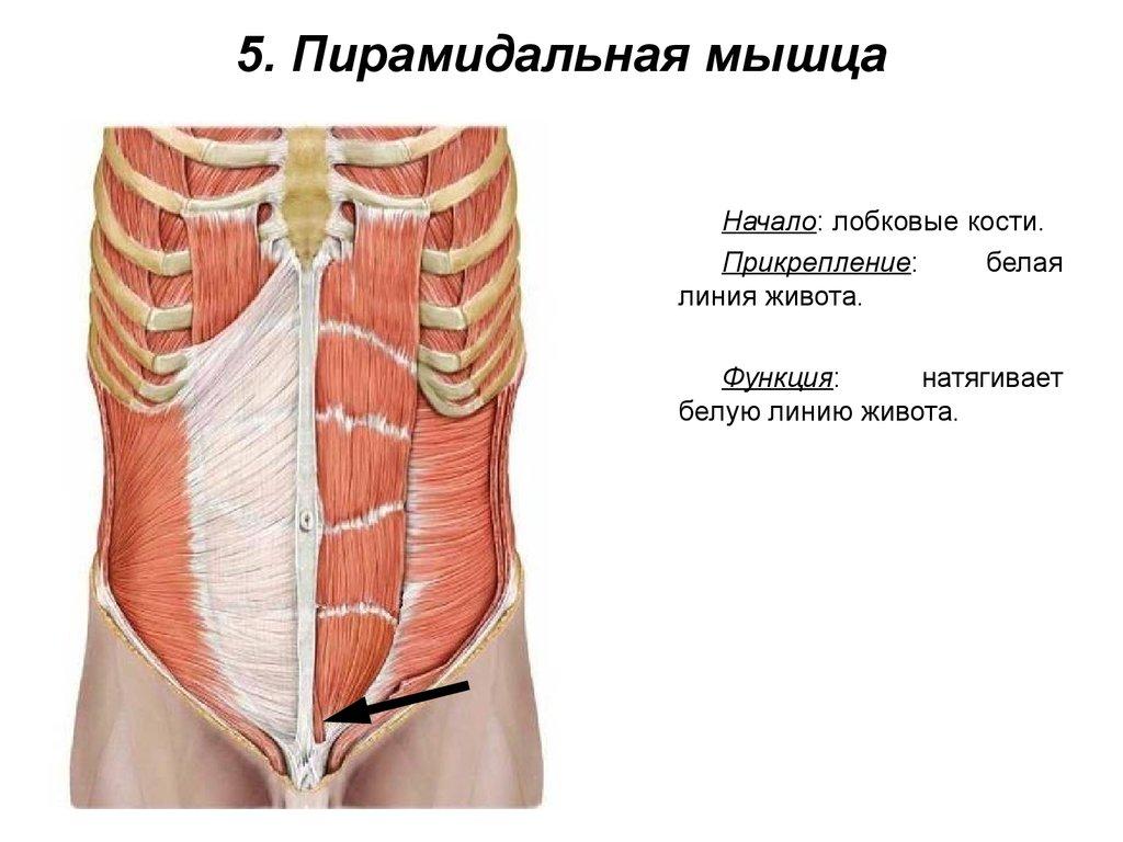От чего ослабли мышцы влагалища