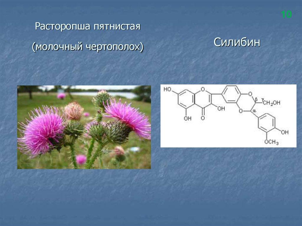 растения ростовской области в картинках