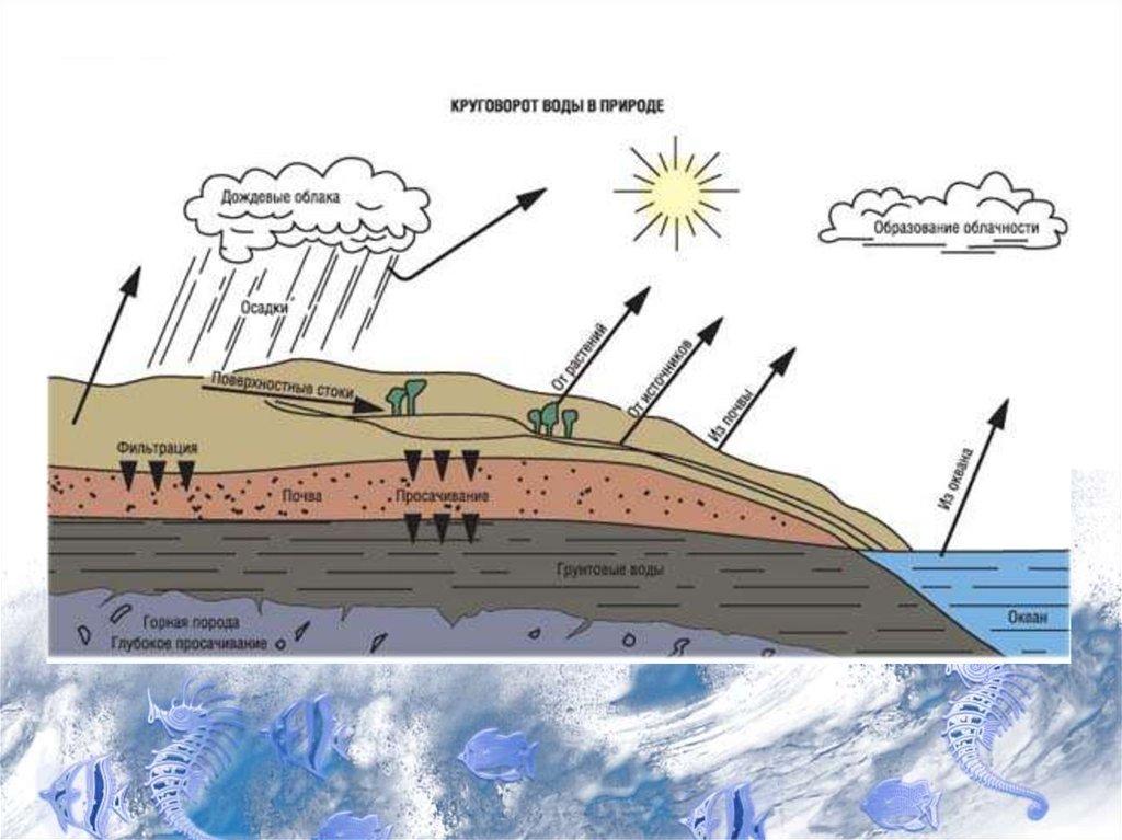 охрана водных ресурсов реферат