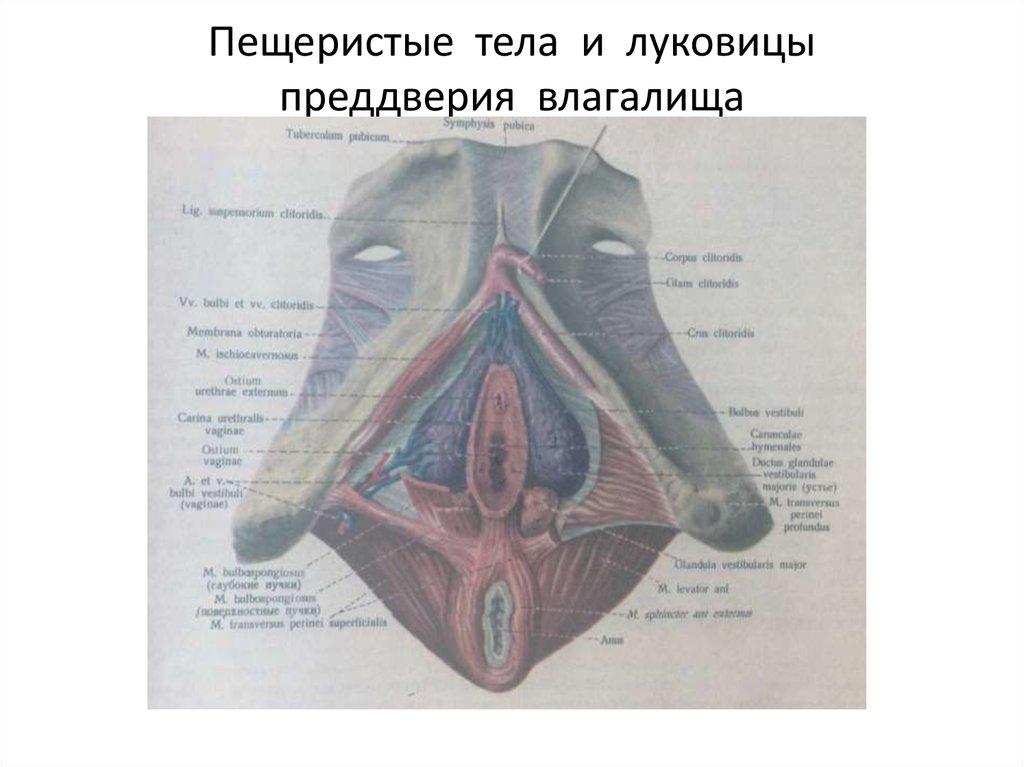 porno-vagina-ru
