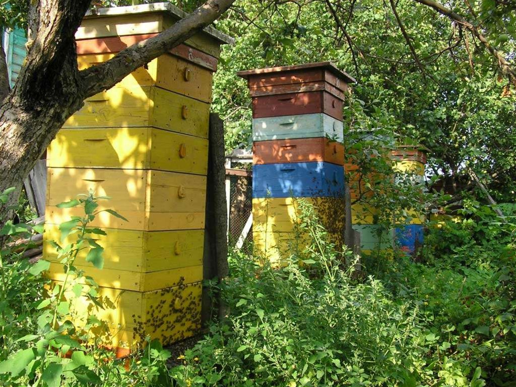 утримання бджіл у вуликах лежаках