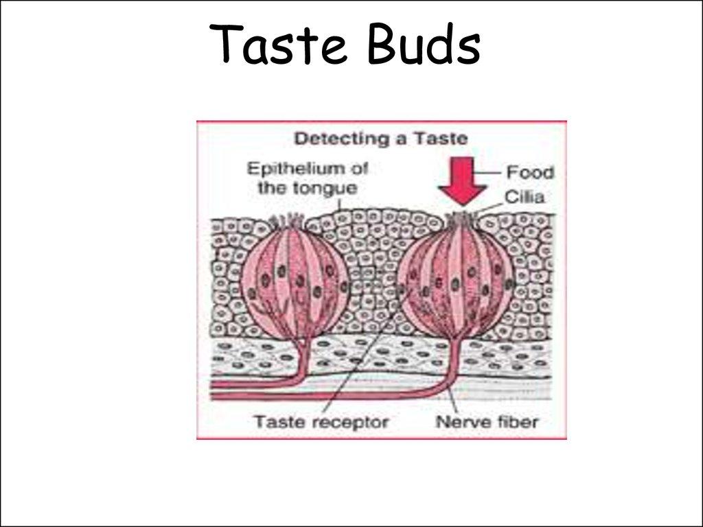 Taste buds online dating