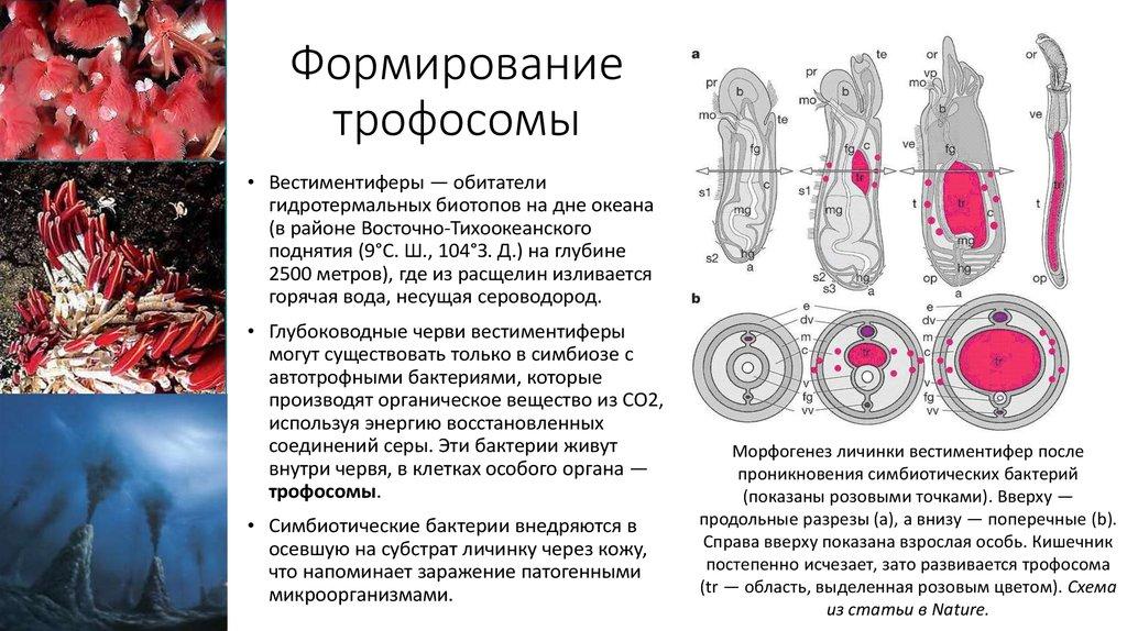 Загадки в стихах по биологии 6 класс на тему бактерии ...