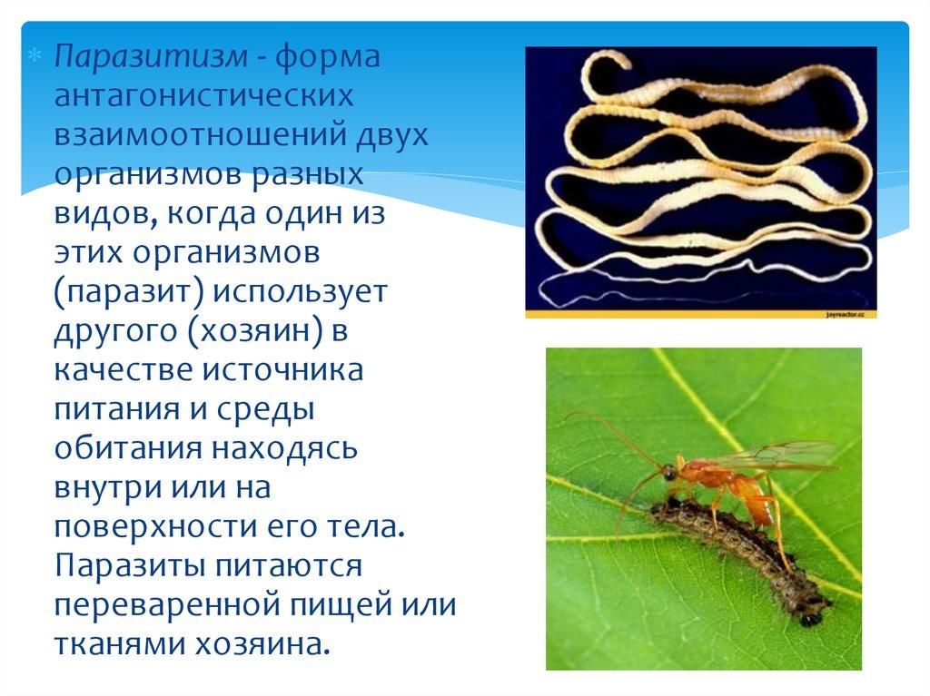 чем питаются паразиты в организме человека