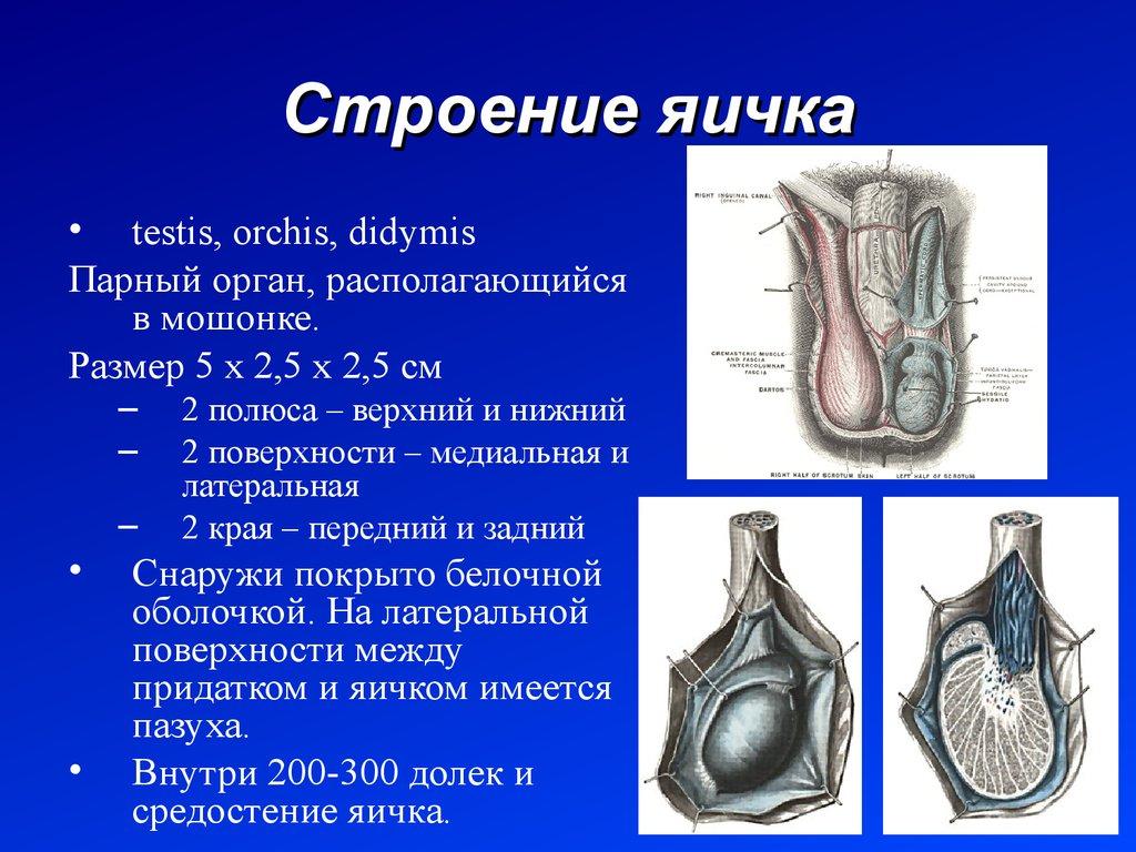 доктор белова лечение наследственных болезней