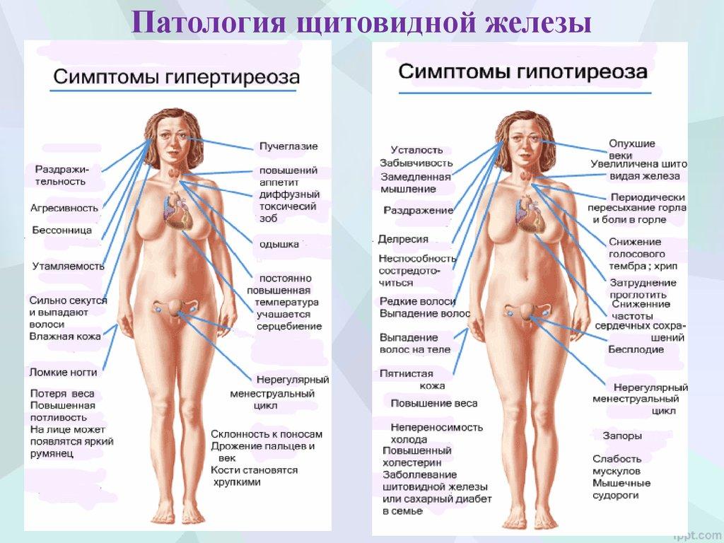 либерины статины тропные гормоны гипофиза