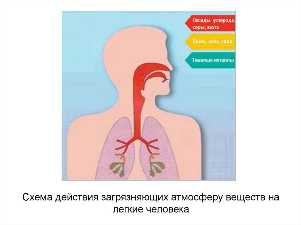 здоровье и окружающая среда реферат
