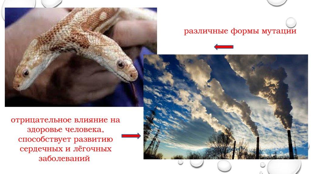Защищать природу картинки