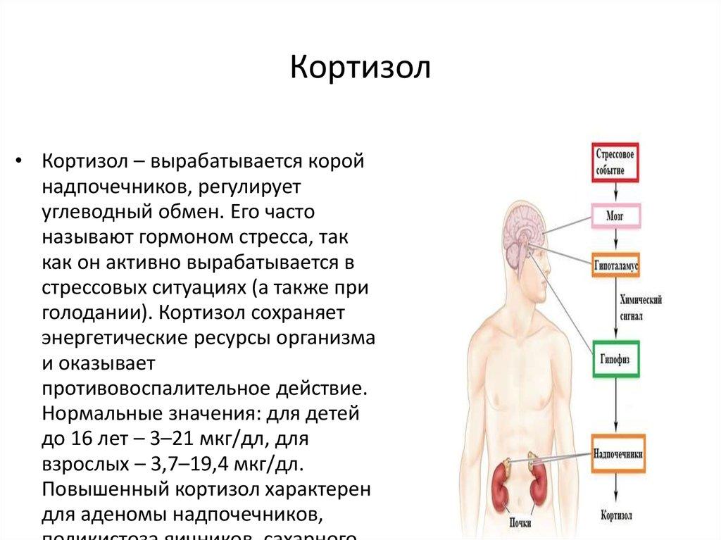 Уровень кортизола для беременных