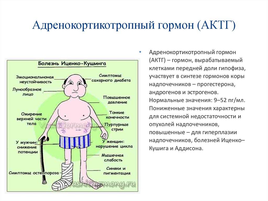 gormoni-pri-narusheniyah-v-spermogramme