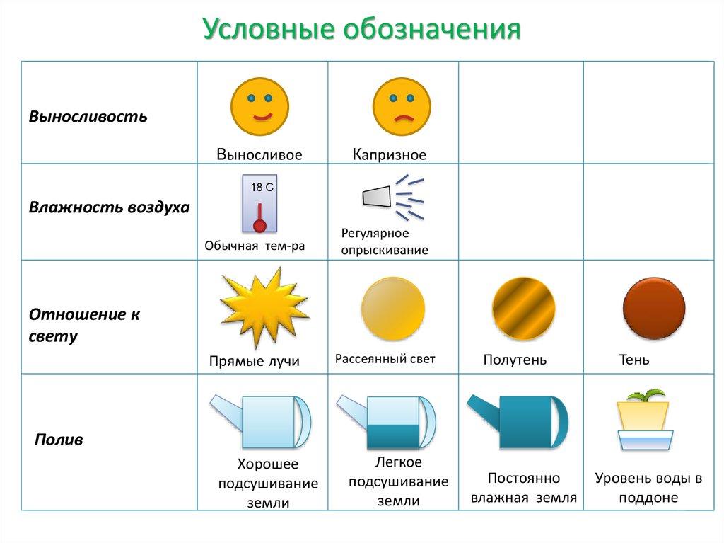 Зимний комбинезон интернет магазин