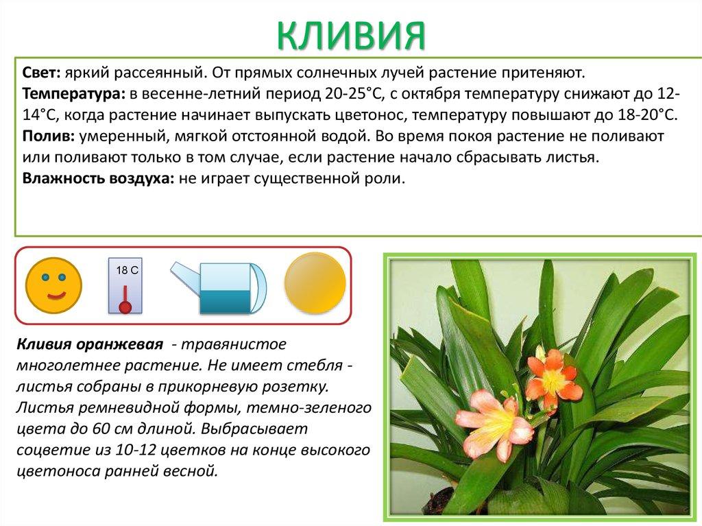 Цветы обозначения
