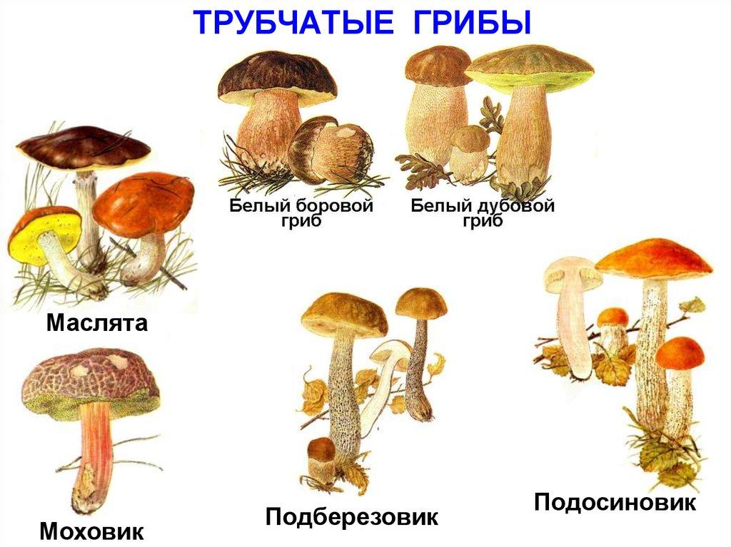 грибы паразиты человека список