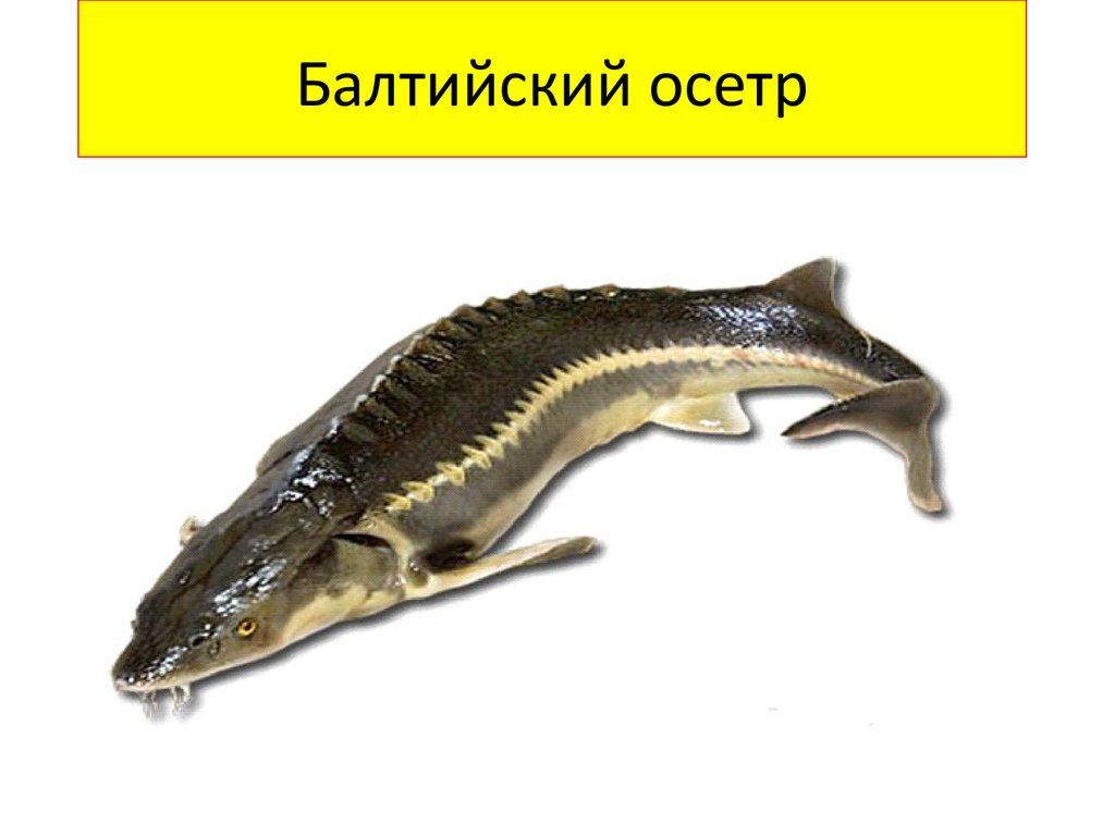 Kniga Krasnaya