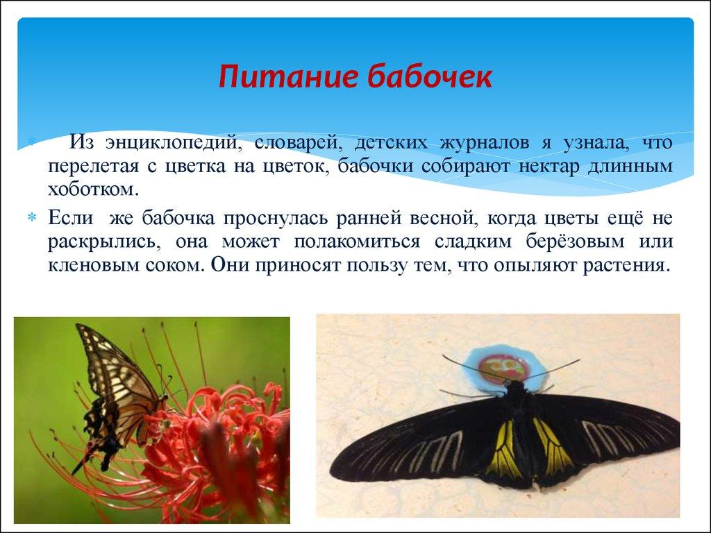бабочки крыма презентация