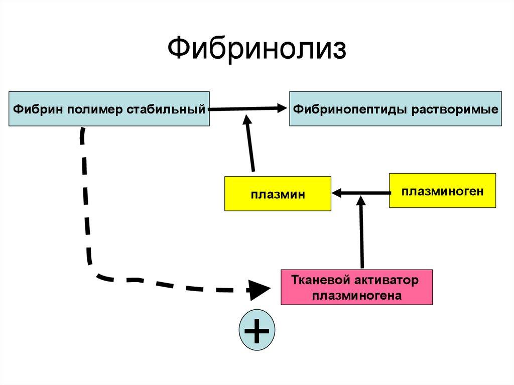 Фибринолиз