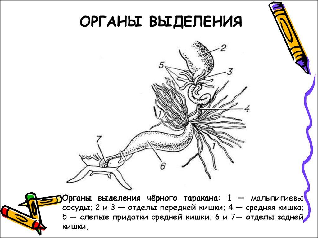 Класс насекомые - online presentation