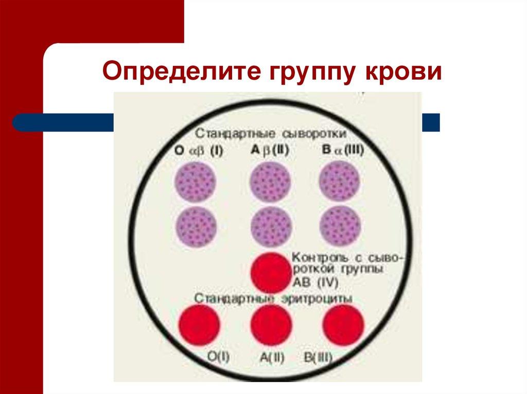 Узнать свою группу крови домашних условиях