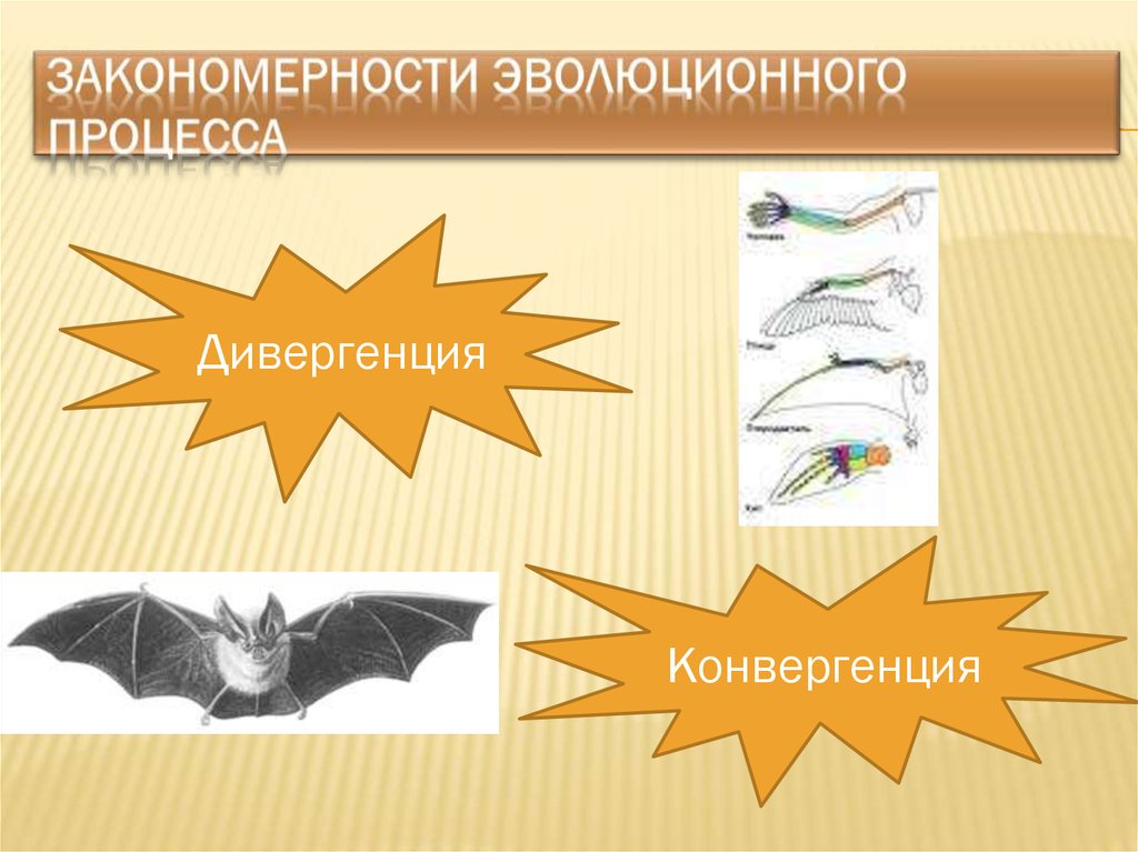 презентации для супервайзеров освоение новых территорий