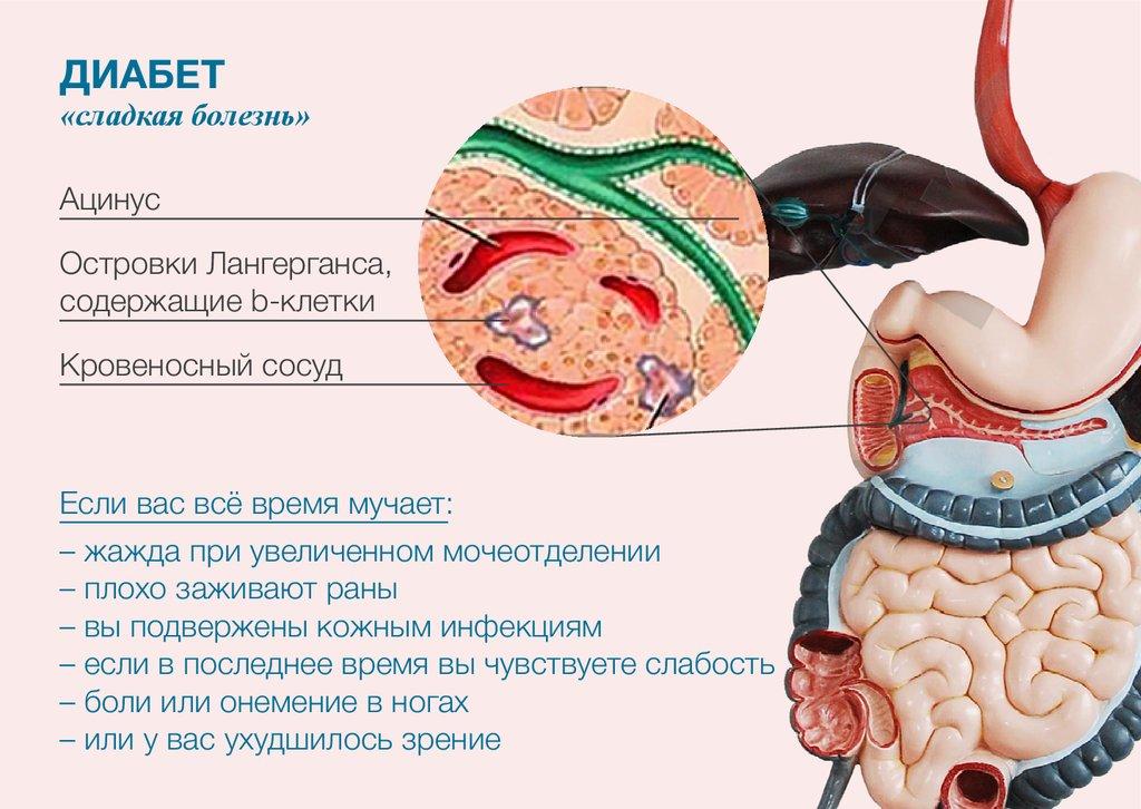 статины против холестерина