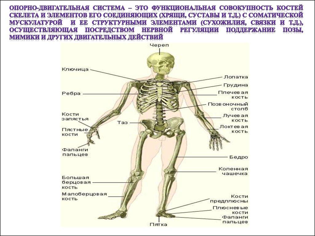 Жировик. лечение народными методами