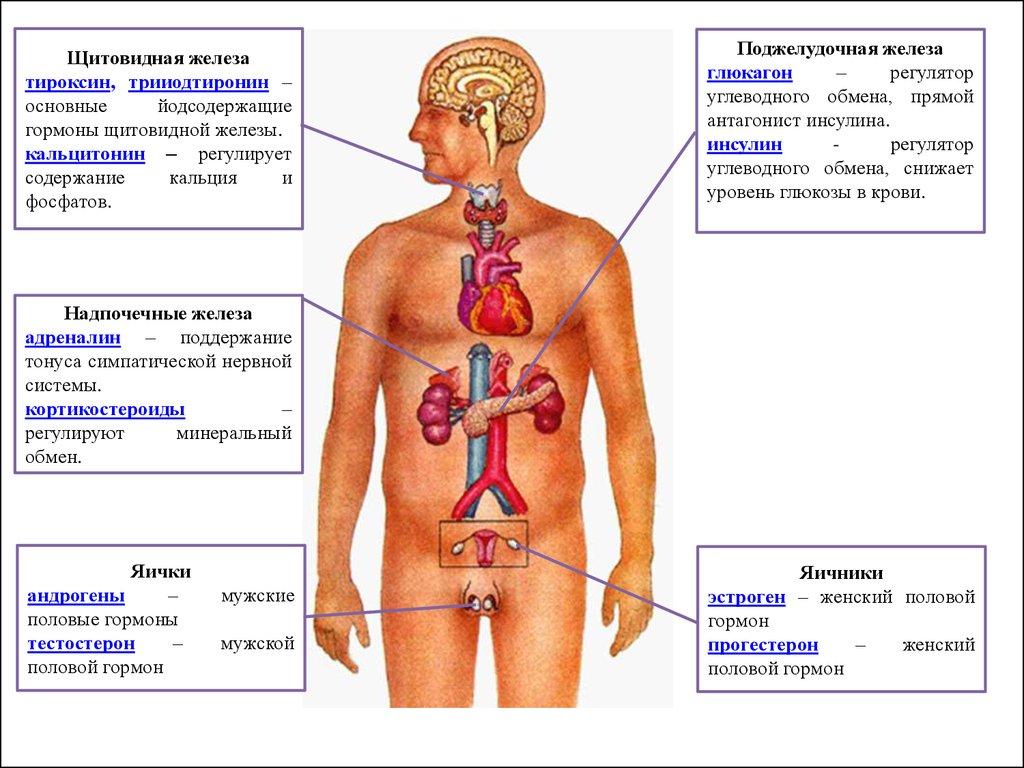 Гормоны при раке предстательной железы