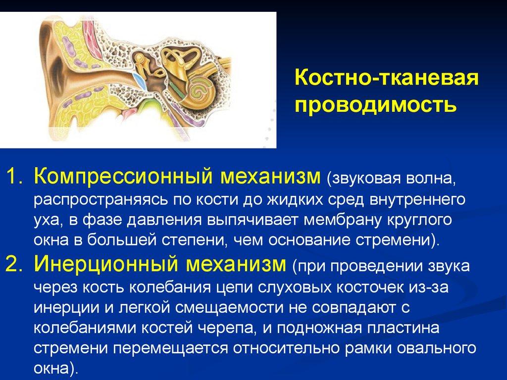 Труба Слуховая (Евстахиева)