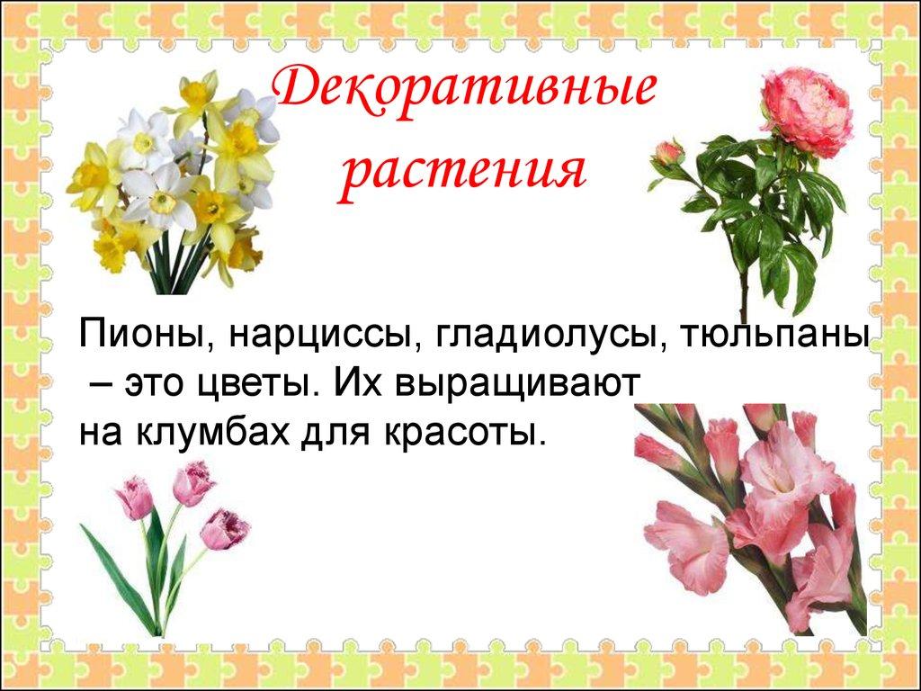 <b>Растения</b> культурные и дикорастущие - презентация онлайн