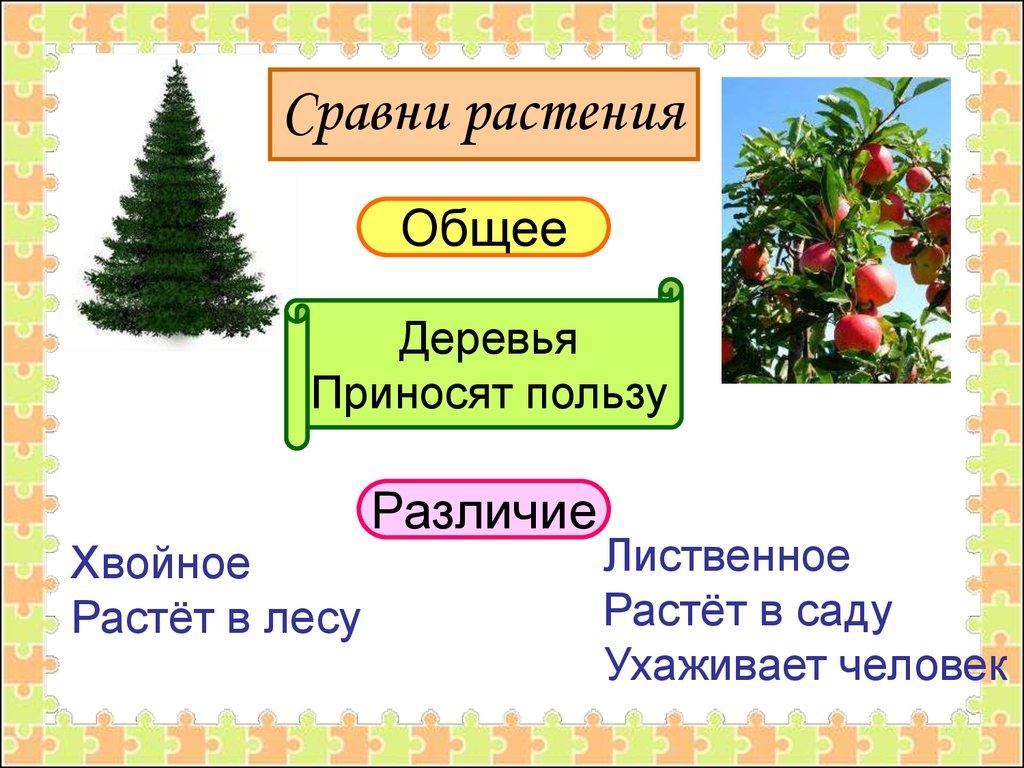 полевые культурные растения названия и фото
