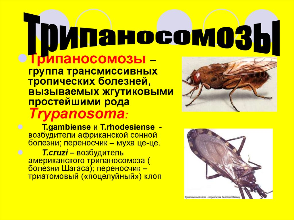 простейшие паразиты человека симптомы